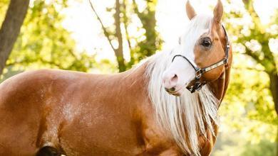 Pferde Österreich Für Whatsapp 390x220 - Pferde Österreich Für Whatsapp