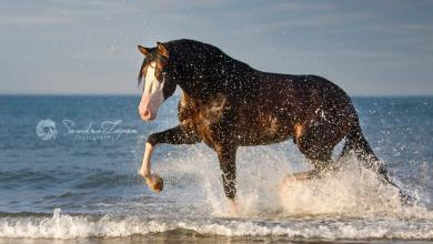 Pferde 390x220 - Pferde