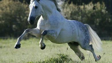 Pferde Aktuell Für Facebook 390x220 - Pferde Aktuell Für Facebook