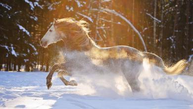 Pferde Als Hintergrundbild Für Facebook 390x220 - Pferde Als Hintergrundbild Für Facebook