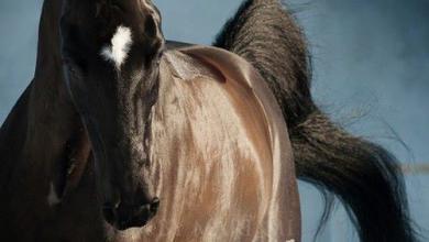 Pferde Andalusier Bilder Für Facebook 390x220 - Pferde Andalusier Bilder Für Facebook