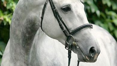 Pferde Andalusier Bilder Für Whatsapp 390x220 - Pferde Andalusier Bilder Für Whatsapp