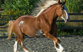 Pferde Aus Verden Für Facebook 350x220 - Pferde Aus Verden Für Facebook