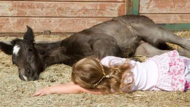 Pferde Ausdruck Bilder Kostenlos Herunterladen 390x220 - Pferde Ausdruck Bilder Kostenlos Herunterladen