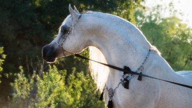 Pferde Ausmalbilder 390x220 - Pferde Ausmalbilder