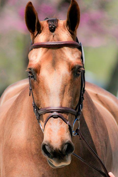 Pferde Ausmalbilder Für Whatsapp - Pferde Ausmalbilder Für Whatsapp