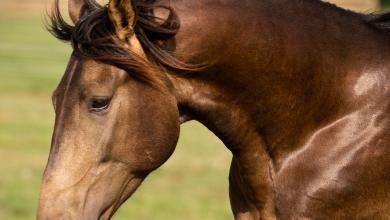 Pferde Ausmalbilder Kostenlos Herunterladen 390x220 - Pferde Ausmalbilder Kostenlos Herunterladen