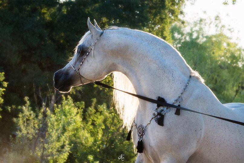 Pferde Ausmalbilder - Pferde Ausmalbilder