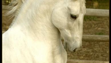 Pferde Ausmalen Bilder Für Facebook 390x220 - Pferde Ausmalen Bilder Für Facebook