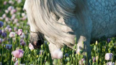 Pferde Bilder 390x220 - Pferde Bilder