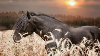 Pferde Bilder Ausdrucken 390x220 - Pferde Bilder Ausdrucken