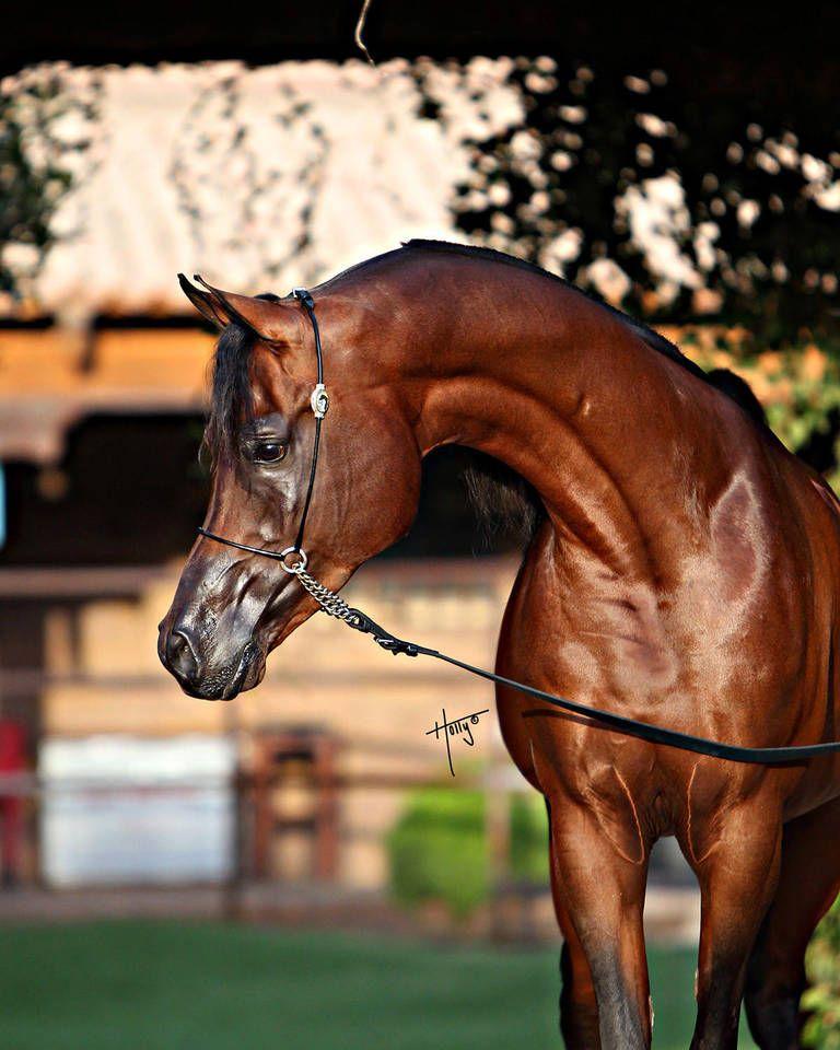 Pferde Bilder Ausdrucken Für Facebook - Pferde Bilder Ausdrucken Für Facebook