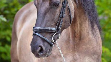 Pferde Bilder Ausdrucken Kostenlos Herunterladen 390x220 - Pferde Bilder Ausdrucken Kostenlos Herunterladen