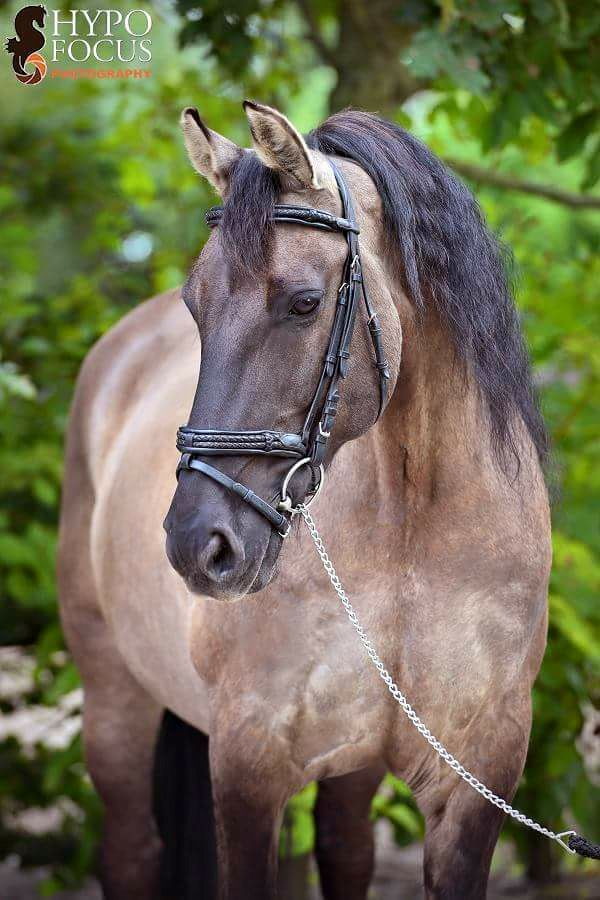 pferde bilder ausdrucken kostenlos herunterladen  bilder