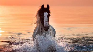 Pferde Bilder Ausmalen Für Facebook 390x220 - Pferde Bilder Ausmalen Für Facebook