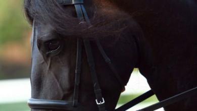Pferde Bilder Gezeichnet 390x220 - Pferde Bilder Gezeichnet