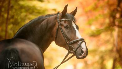 Pferde Bilder Haflinger Für Facebook 390x220 - Pferde Bilder Haflinger Für Facebook