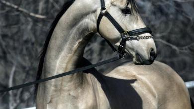 Pferde Bilder Kostenlos Downloaden 390x220 - Pferde Bilder Kostenlos Downloaden