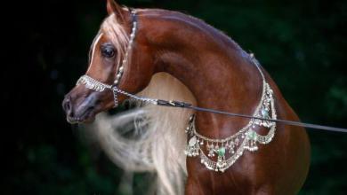 Pferde Bilder Kostenlos Herunterladen 390x220 - Pferde Bilder Kostenlos Herunterladen