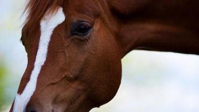 Pferde Bilder Kostenlos Kostenlos Herunterladen 390x220 - Pferde Bilder Kostenlos Kostenlos Herunterladen