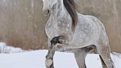 Pferde Bilder Schwarz 390x220 - Pferde Bilder Schwarz