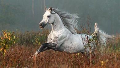 Pferde Bilder Schwarz Für Whatsapp 390x220 - Pferde Bilder Schwarz Für Whatsapp
