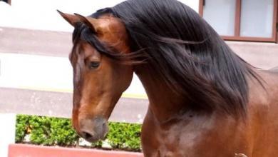 Pferde Bilder Schwarz Kostenlos Herunterladen 390x220 - Pferde Bilder Schwarz Kostenlos Herunterladen