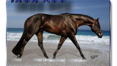Pferde Bilder Tinker Für Whatsapp 390x220 - Pferde Bilder Tinker Für Whatsapp