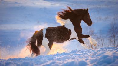 Pferde Bilder Zum Herunterladen Für Facebook 390x220 - Pferde Bilder Zum Herunterladen Für Facebook