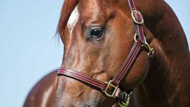 Pferde Bilder Zum Herunterladen Für Whatsapp 390x220 - Pferde Bilder Zum Herunterladen Für Whatsapp