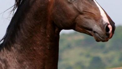 Pferde Billig Kaufen 390x220 - Pferde Billig Kaufen