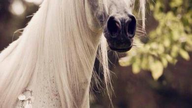 Pferde Desktop Hintergrundbilder 390x220 - Pferde Desktop Hintergrundbilder