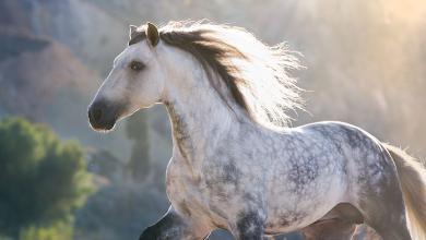 Pferde Desktop Hintergrundbilder Kostenlos Herunterladen 390x220 - Pferde Desktop Hintergrundbilder Kostenlos Herunterladen