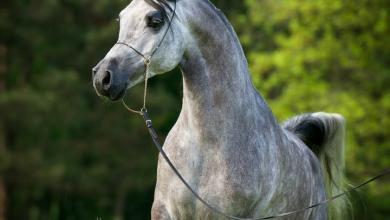Pferde Fantasy Bilder 390x220 - Pferde Fantasy Bilder