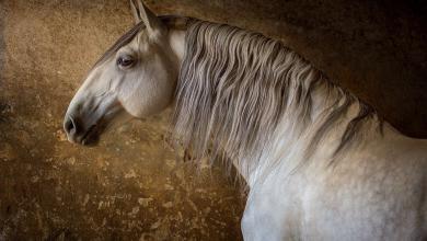 Pferde Fantasy Bilder Für Whatsapp 390x220 - Pferde Fantasy Bilder Für Whatsapp