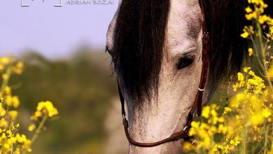 Pferde Fantasy Bilder Kostenlos Herunterladen 390x220 - Pferde Fantasy Bilder Kostenlos Herunterladen
