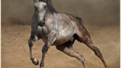 Pferde Fohlen Bilder 390x220 - Pferde Fohlen Bilder