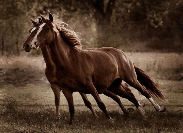 Pferde Fohlen Bilder Für Facebook - Pferde Fohlen Bilder Für Facebook