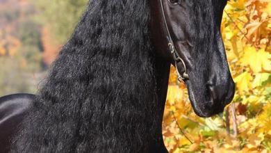 Pferde Fohlen Für Facebook 390x220 - Pferde Fohlen Für Facebook