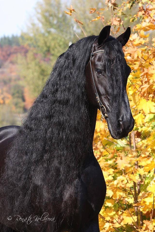 Pferde Fohlen Für Facebook - Pferde Fohlen Für Facebook