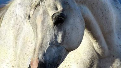 Pferde Fotos 390x220 - Pferde Fotos