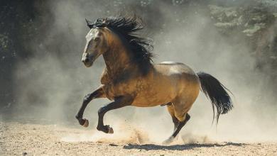 Pferde Fotos Kostenlos Downloaden 390x220 - Pferde Fotos Kostenlos Downloaden