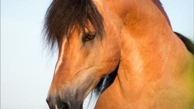 Pferde Freunde Fürs Leben Für Facebook 390x220 - Pferde Freunde Fürs Leben Für Facebook
