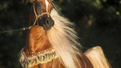 Pferde Geburtstagsbilder Für Facebook 390x220 - Pferde Geburtstagsbilder Für Facebook