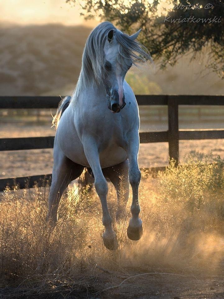 Pferde Gemälde Öl Für Facebook - Pferde Gemälde Öl Für Facebook