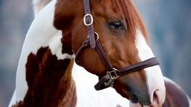 Pferde Gemälde Kaufen Für Facebook 390x220 - Pferde Gemälde Kaufen Für Facebook