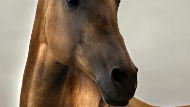 Pferde Gemälde Kaufen Kostenlos Downloaden 390x220 - Pferde Gemälde Kaufen Kostenlos Downloaden