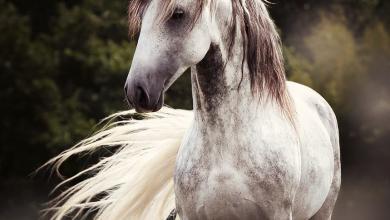 Pferde Haflinger Bilder Für Facebook 390x220 - Pferde Haflinger Bilder Für Facebook