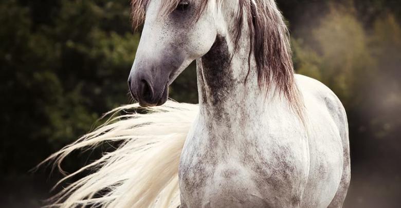 pferde haflinger bilder für facebook  bilder und sprüche