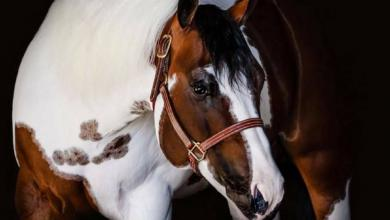 Pferde Haflinger Bilder Für Whatsapp 390x220 - Pferde Haflinger Bilder Für Whatsapp